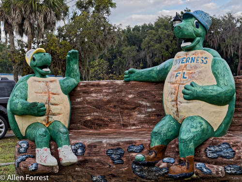 Inverness Cooters. Turtle Concrete Sculpture by T.J. Neils. T.J. Neil has been doing this for 30 years, and recently his son T.J. Neil Jr. has picked up the trade.
